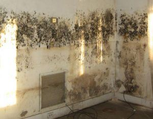 damp and mould specialists in cambridge
